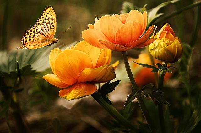 תמונות רקע - פרחים, פרפר כתום