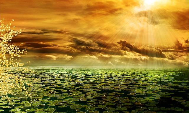 תמונות רקע - נוף, שמש, עננים, אצות, אגם, עץ
