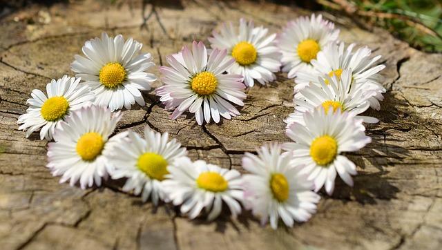 תמונות של לבבות - פרחים