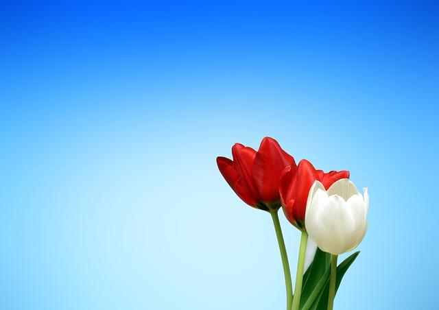 תמונות רקע - פרחים, שמיים