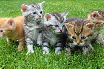 תמונות יפות של חתולים