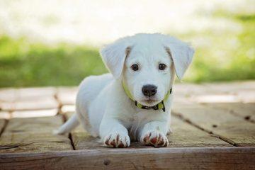 תמונות יפות של כלבים